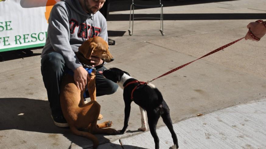 TKE promotes local animal shelter
