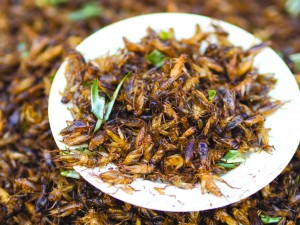 Crickets require 12-times less feed than cattle to produce the same amount of protein. Around the world, crickets are consumed and prepared in a variety of ways. The pictured dish is Chingrit thot, a Thai appetizer consisting of deep-fried crickets.
