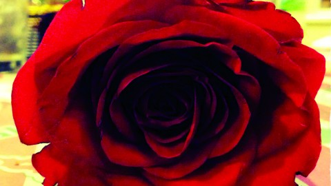 """Photo credit of surfergirl30/Flickr.com by 2.0 """"Valentine's Day Rose""""/ The Jambar."""