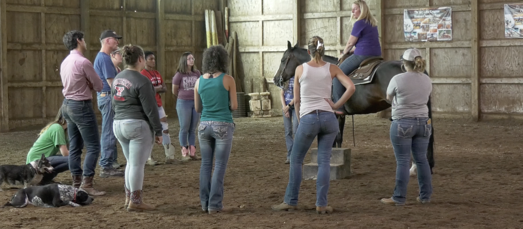 Horseback Riding Class Now Offered at YSU