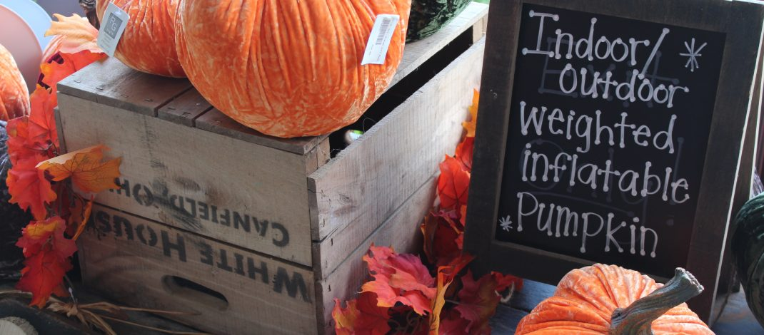 Pumpkin Spice and Everything Nice at White House Fruit Farm